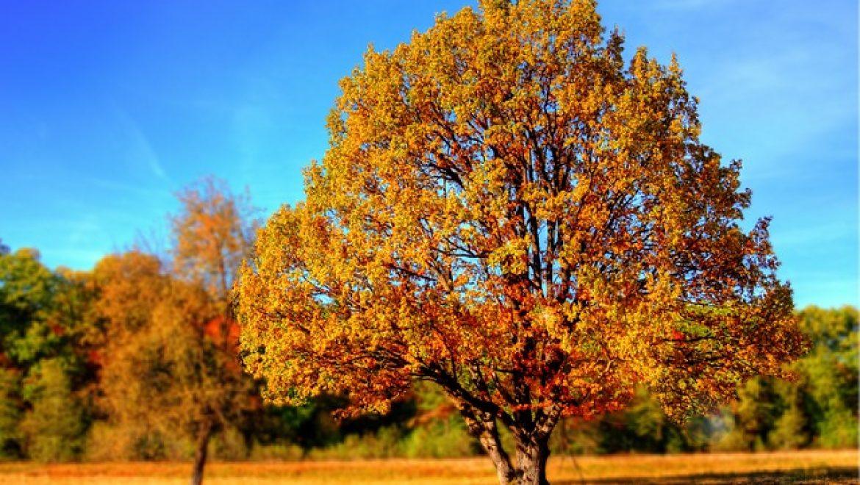 מה זה העתקת עצים?